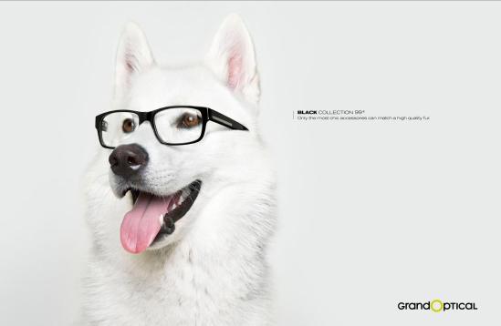 20-anuncios-creativos-animales-como-protagoni-L-pKWdgk