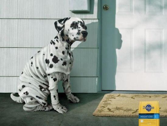 Anuncios-Comida-Perros-3